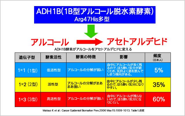 AHD1B(アルコール脱水素酵素)がアルコールをアセトアルデヒドに変える