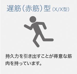 遅筋(赤筋)型 (X/X型)