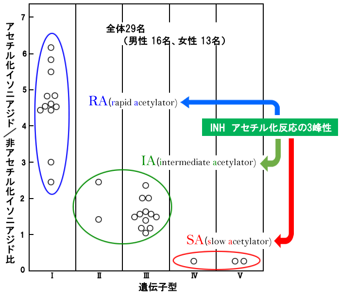 イソニアジド(INH)とNAT2遺伝子型|おくすり遺伝子検査 - NAT2遺伝子 ...